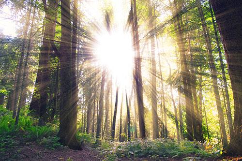 Sun through trees